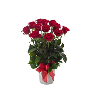 Impulse 12 Red Roses